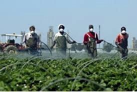 Combattre l'exploitation de la main d'oeuvre dans l'agriculture : défendre les travailleur.euses (3/3)