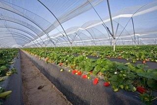 Combattre l'exploitation de la main d'oeuvre dans l'agriculture : Egalité de droits ! (2/3)